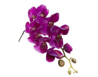 7A03A00011 Орхидея фиолетовая 105 см (8)